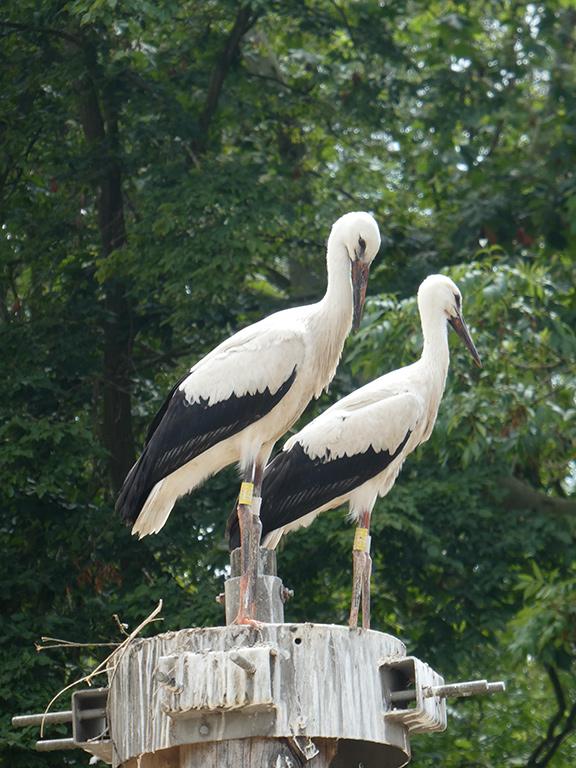 Zoo Planckendael